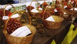 Festa delle Castagne  - Mostra mercato del Marrone DOP di San Zeno